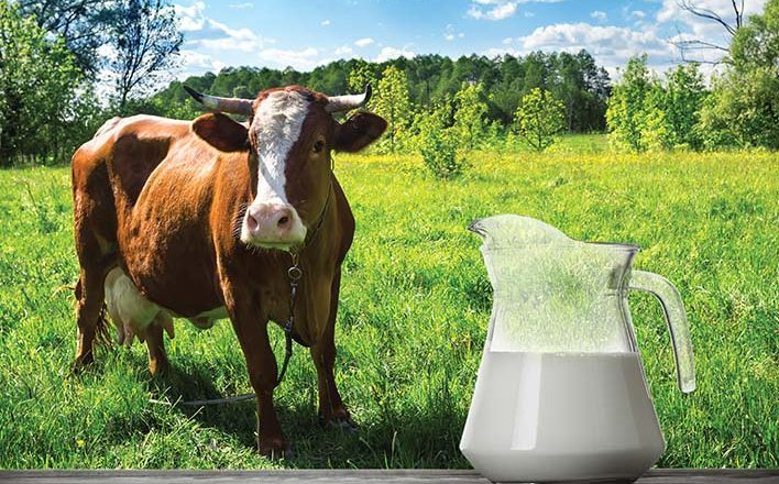 Your Business is Like a Cow - Thinking Bigger