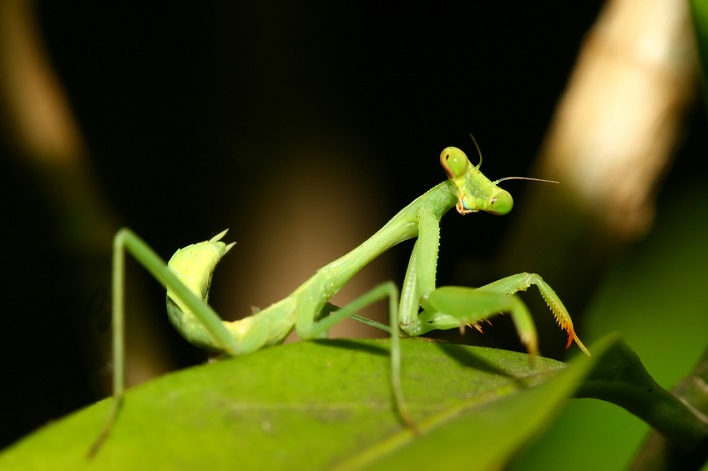 What the Royals' Rally Mantis Reveals about Engagement and Motivation