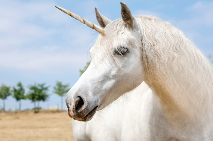 Stop Hunting for Unicorns
