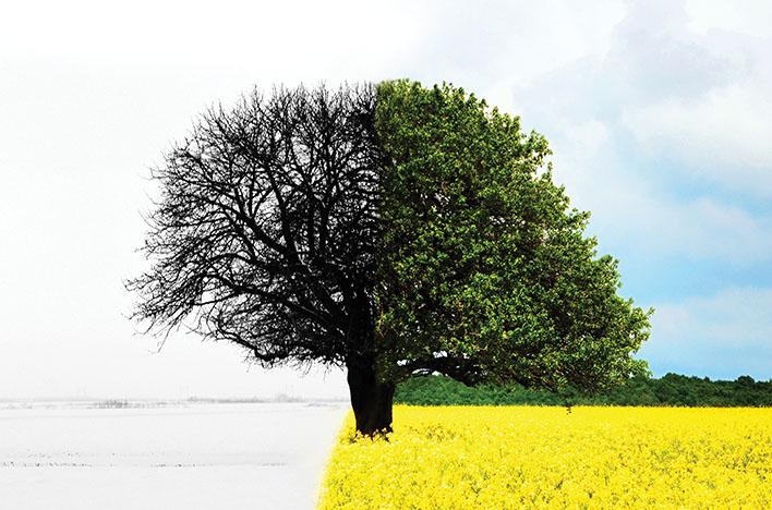Using Crisis to Grow