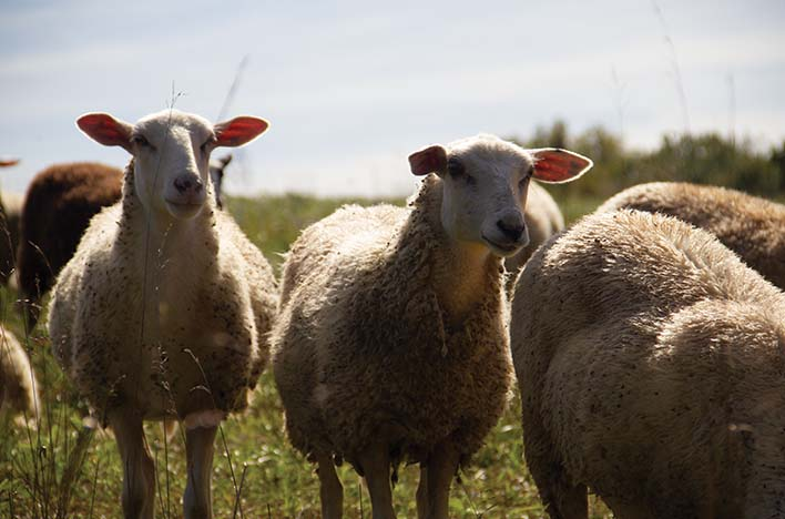 Green Dirt Farm: No cheesy story